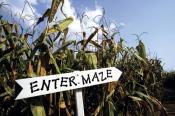 Corn-Maze enter